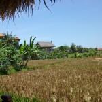 Bali9