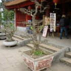 Hanoi-Halong-Bay18